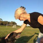 get up and go, old dog, arthritis, joint pain, natural, alternative, medication , vet bills