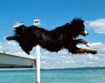 e-dock-dog