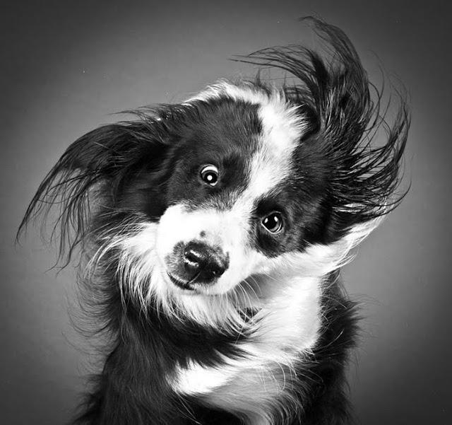 8. getupandgo-dog-photo-shake